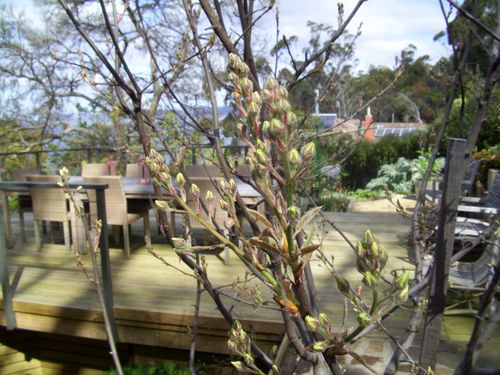 Cottage and garden 067
