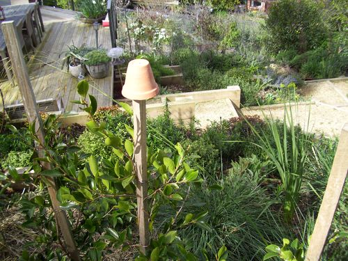 Cottage and garden 078