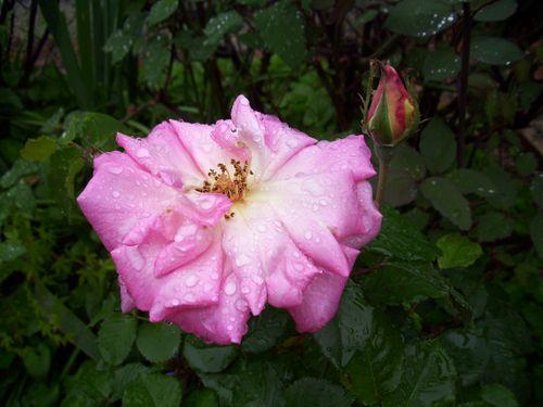 Rainy day 052