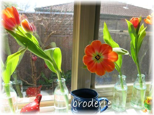 Tulips 006
